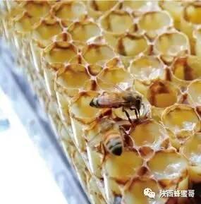 四川 养蜂蜜 蜂蜜怎么 蜂蜜价格表 蜂蜜玫瑰