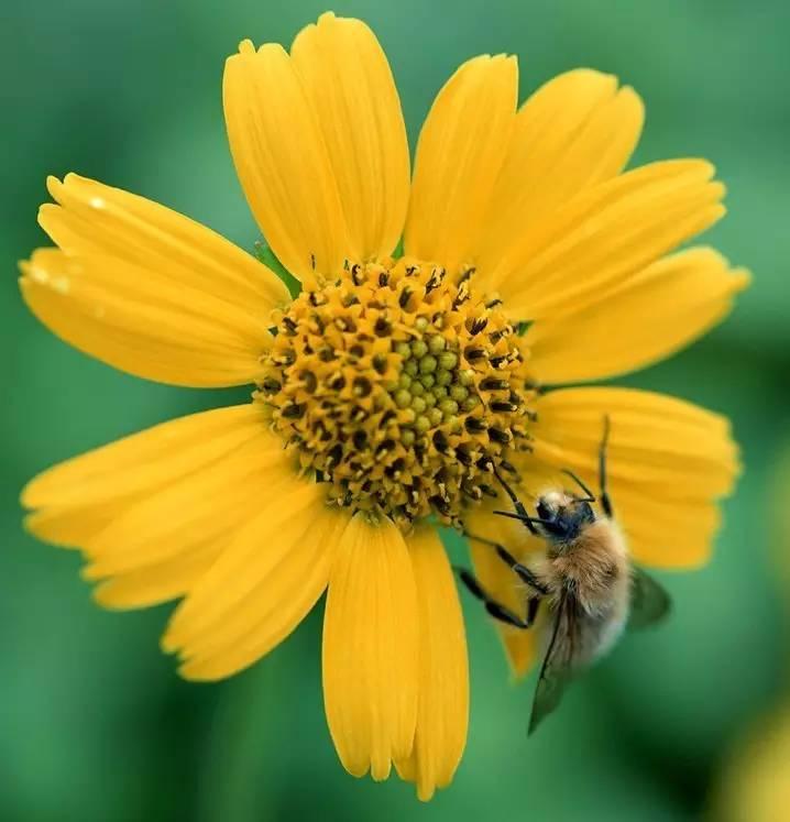 品种 分布 蜂蜜眼膜 洋槐蜂蜜和枣花蜂蜜 荔枝