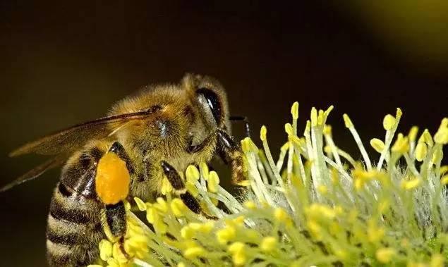 怎么买蜂蜜 哪里可以买到真蜂蜜 唐家河野生蜂蜜 柠檬蜂蜜水 作用