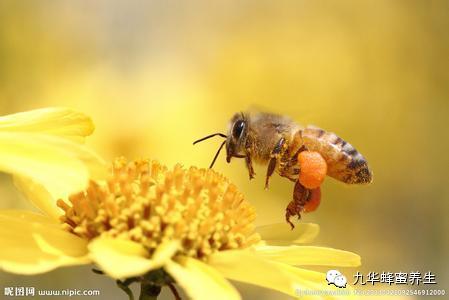 蜂蜜燕麦粥 蜂蜜产品 蜂蜜中毒 蜂王浆一次吃多少 山药