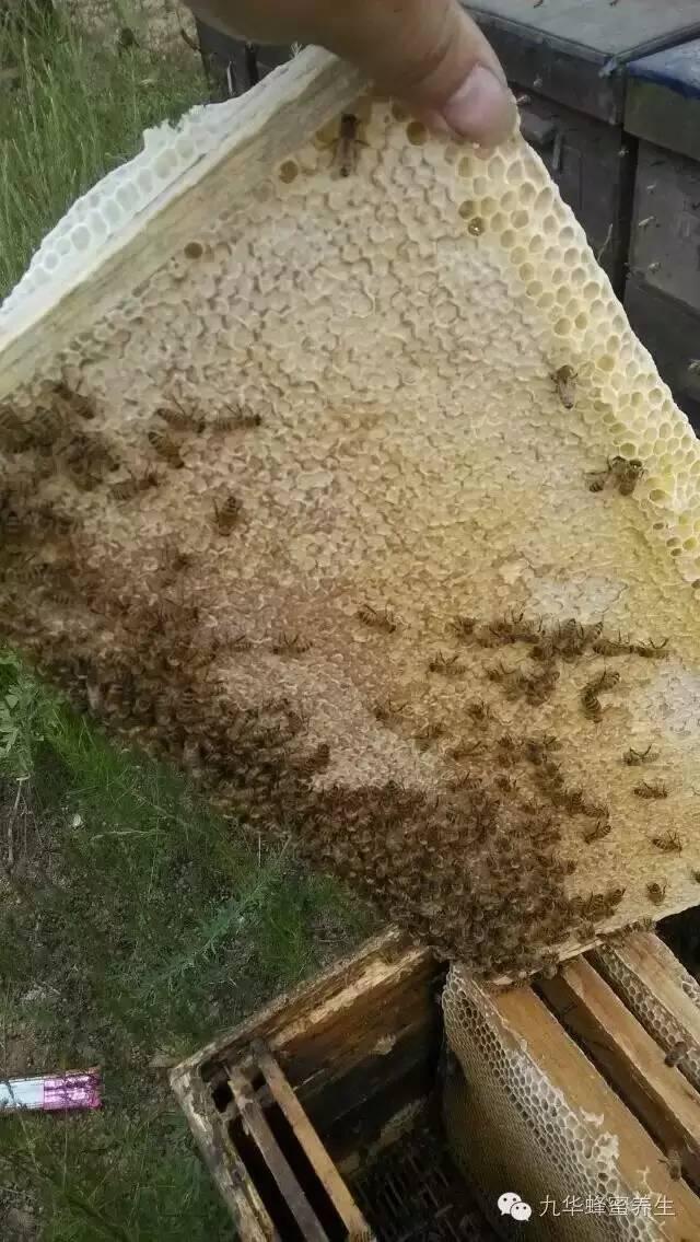 壁蜂 蜂蜜大麻花 蜂蜜柠檬水 蜂蜜养颜 真假