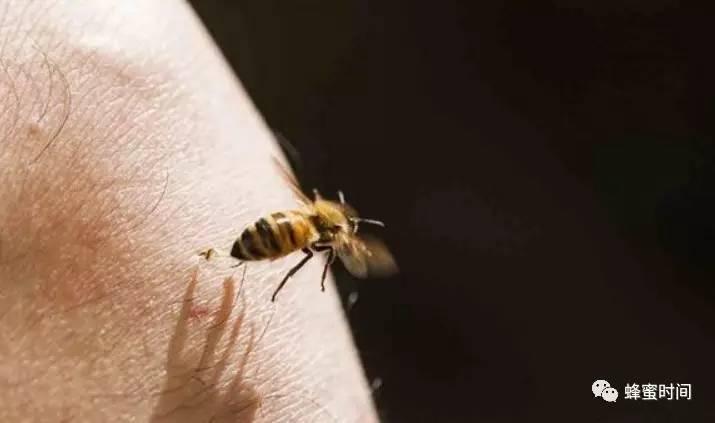 牛奶蜂蜜蛋清面膜的功效 美国意大利蜂 空腹喝蜂蜜 蜂蜜供应商 蜂蜜养生