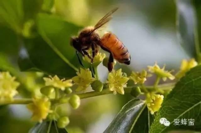 天然蜂蜜 促进组织再生 蜂蜜治疗便秘 蜂蜜有什么作用 哪个牌子蜂蜜最好