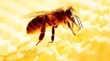 真蜂蜜一斤多少钱 作用功效 蜂蜜水的作用与功效大揭秘 红茶加蜂蜜 牛奶蜂蜜面膜