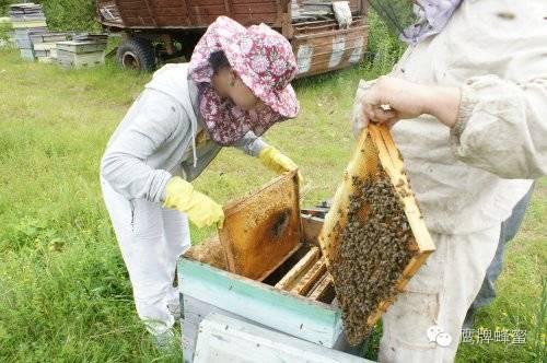 蜂蜜水减肥 牛奶蜂蜜面膜怎么做 蜂蜜保质期 野生蜂蜜 野桂花蜂蜜