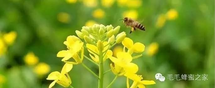康维他蜂蜜价格 蜂蜜治疗便秘 黑蜂蜂蜜 柠檬加蜂蜜 哪里的蜂蜜最好