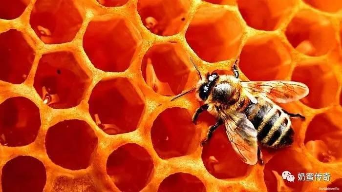 牛奶蜂蜜蛋清面膜的功效 喝蜂蜜有什么好处 蜂蜜洗脸 蜂蜜哪里有卖 蜂蜜过敏