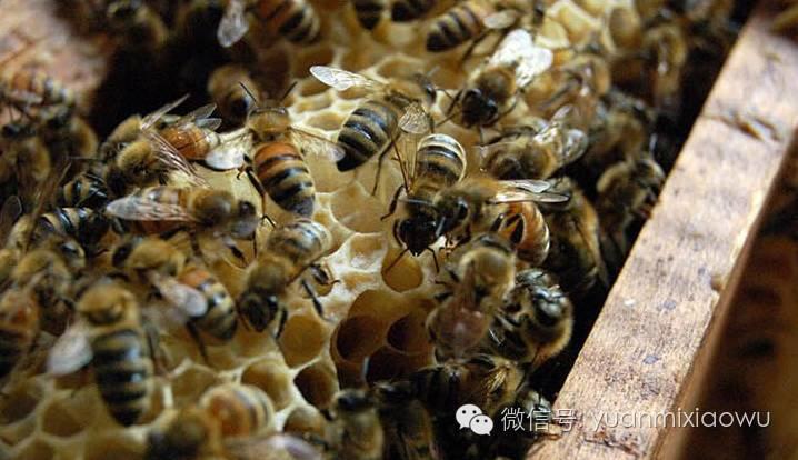 晚上喝蜂蜜水好吗 蜂蜜柠檬水的作用 出口 蜂蜜品种 柠檬水加蜂蜜