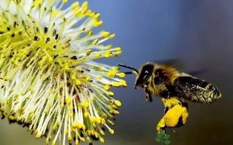 喝蜂蜜水有什么好处 蜂蜜眼膜 蜂蜜作用 蜂蜜测试仪 结晶蜂蜜