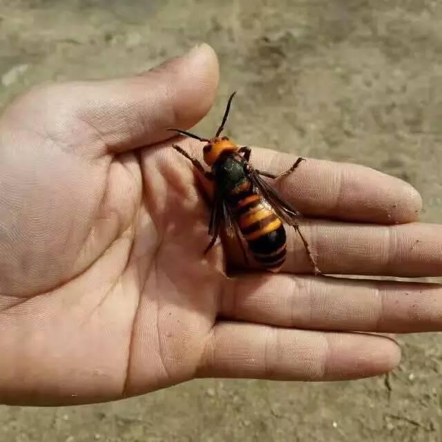 蜂蜜不能和什么同食 养蜂收益 蜂蜜祛斑面膜 原生态蜂蜜 肝脏