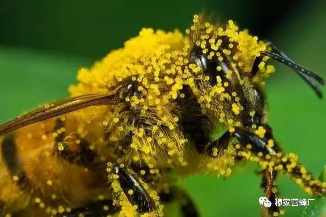 食物相克 如何用蜂蜜美容 检验法 原浆蜂蜜 三七粉加蜂蜜面膜