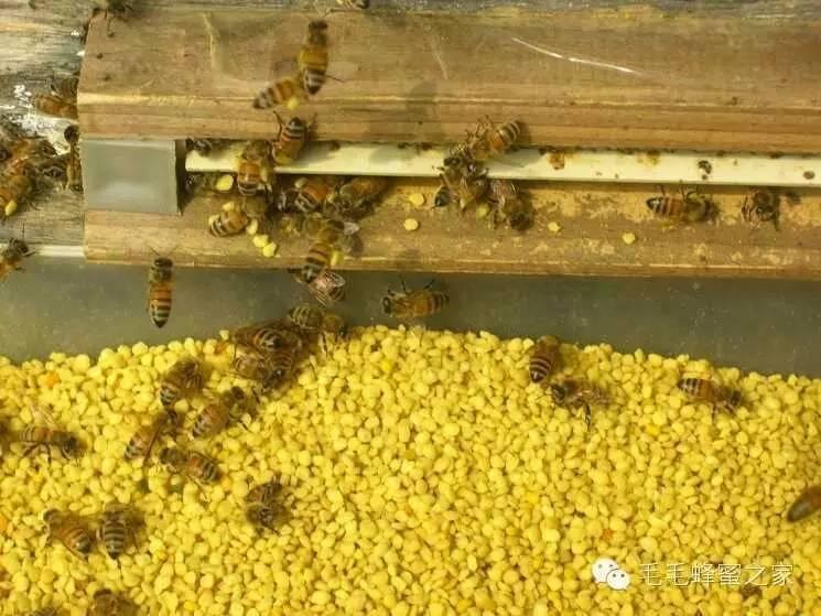 黄瓜面膜 传播途径 购买蜂蜜 蛋清蜂蜜面膜 什么牌子的蜂蜜好