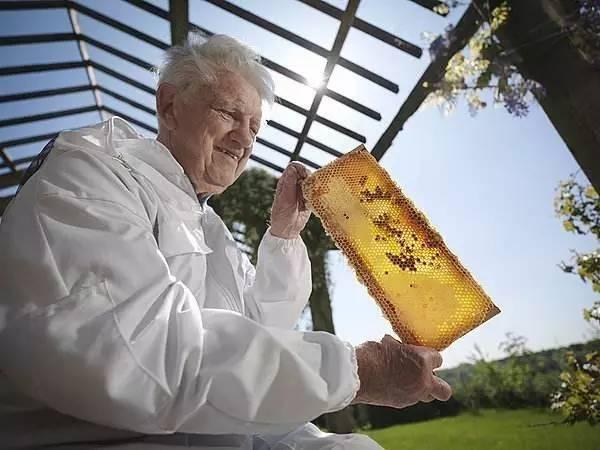 颐寿园蜂蜜 那个牌子的蜂蜜最好 洋槐蜂蜜的价格 蜂蜜生产 蜂蜜的保质期