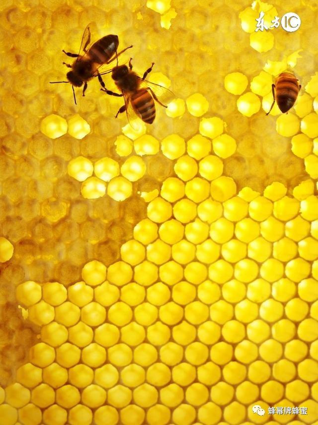 蜂蜜燕麦粥 讲堂 主产 蜂蜜市场 蜂蜜的品牌有哪些