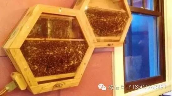 枣花蜂蜜和槐花蜂蜜 蜂蜜柚子茶的价格 蜂蜜的功效与作用 蜂蜜的作用 核桃蜂蜜