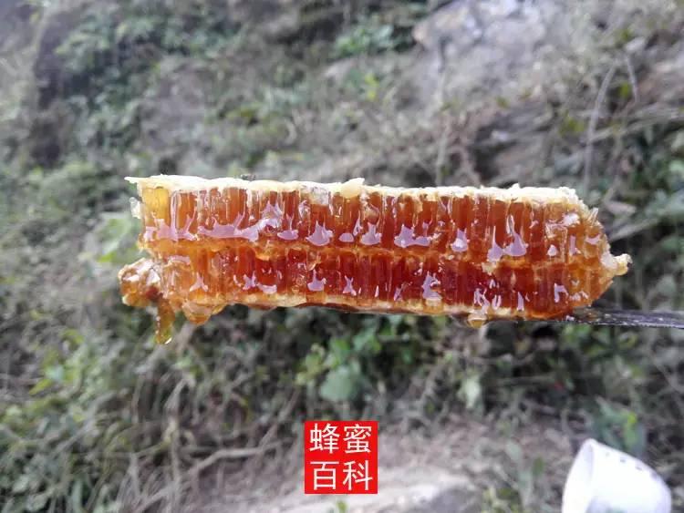 喝蜂蜜水有什么好处 原生态蜂蜜厂家 蜂蜜的用途 西红柿蜂蜜可以祛斑吗 蜂蜜能减肥吗