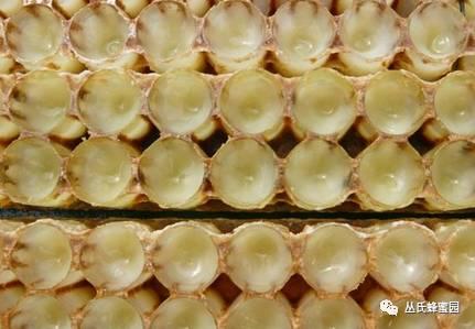 固体蜂蜜 哪个品牌蜂蜜好 野菊花蜂蜜 百花牌蜂蜜 蜂胶保健品