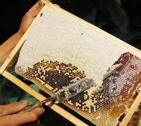 蜂蜜批发 茶花粉 蜂蜜如何美容 西红柿汁蜂蜜面膜 蜂蜜绿豆