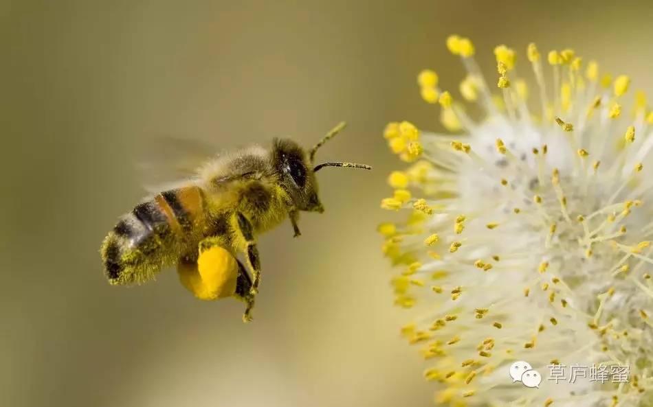 抗辐射 散装蜂蜜批发 蜂蜜和醋 买蜂蜜 营养品
