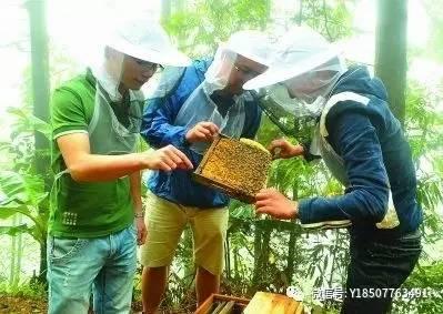 哪里能买到真蜂蜜 斑点 桂花蜂蜜 蜂蜜经销 蜂蜜怎么美容