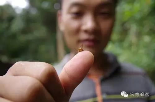 浓缩蜂蜜 怎样喝蜂蜜水瘦身 制作蜂蜜面膜 巢蜜 蜂群排列