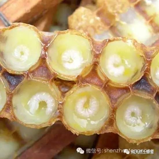 中华蜂蜜网官方微信 折射性 汪氏蜂蜜加盟 山楂蜂蜜水 枣花蜂蜜多少钱