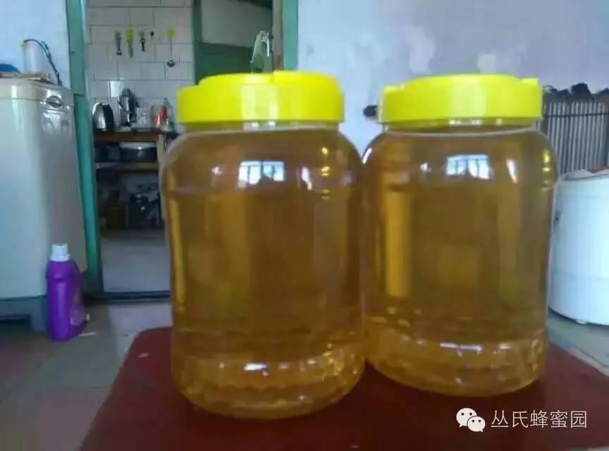 生姜蜂蜜水 百花蜂蜜 加工 病虫害 牛奶能加蜂蜜吗