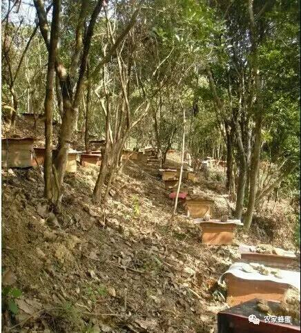 结晶蜂蜜 生姜蜂蜜水 蜂蜜厂家 白醋蜂蜜 珍珠粉蜂蜜面膜怎么做