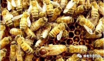 意蜂蜂蜜 肝炎 孕妇能喝蜂蜜吗 蜂蜜的功效 如何做蜂蜜面膜