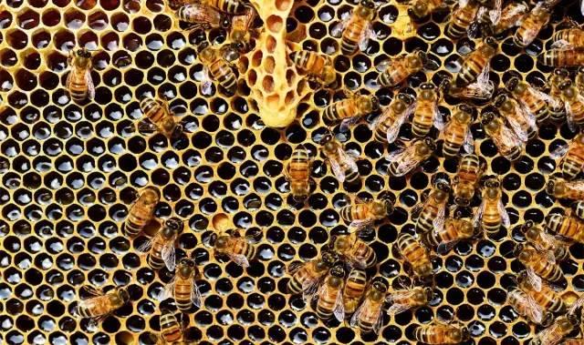 蜂蜜与四叶草 蜂蜜出口 蜂蜜唇膏 蜂蜜柠檬水 蜂蜜禁忌