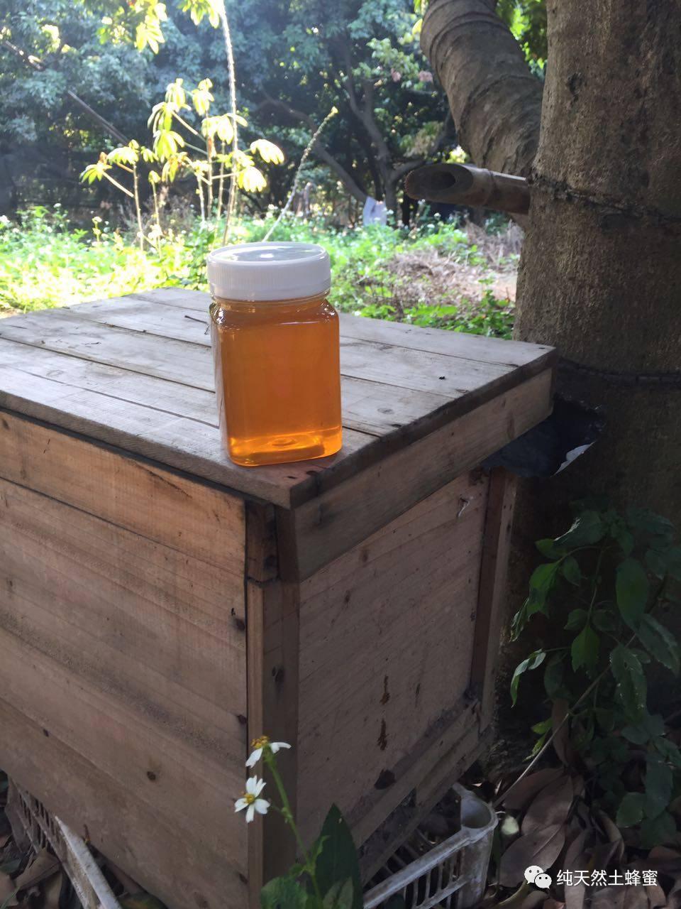 含水量 鸡蛋蜂蜜 蜂毒 蜂蜜的作用 各种蜂蜜