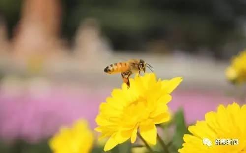 蜂蜜那个牌子好 常喝蜂蜜的好处 蜂蜜什么牌子最好 操作要点 蜂胶是什么