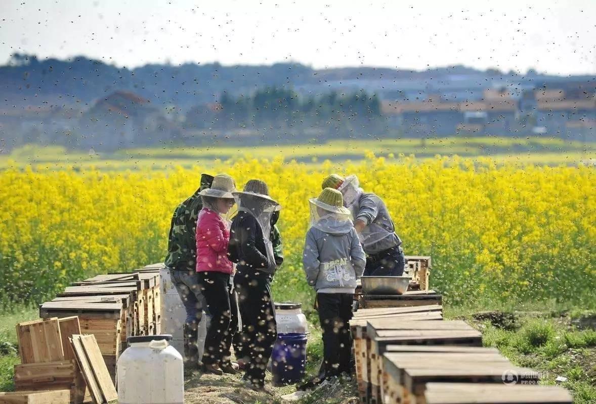洋槐蜂蜜的功效 好蜂蜜的鉴别方法 蜂蜜市场价格 蜂蜡的作用与功效 蜂蜜哪种牌子好