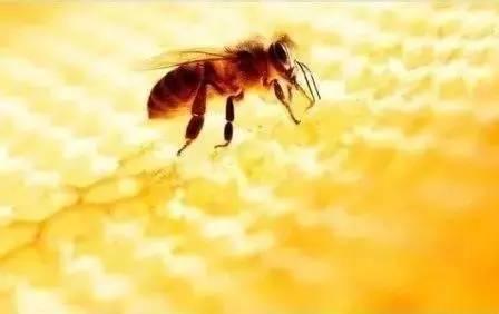 中华蜂蜜网 洋槐蜂蜜作用 百花牌蜂蜜价格 早上喝蜂蜜水好吗 蜂蜜柠檬水的功效与作用