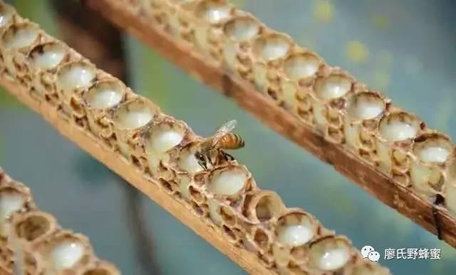 蜂蜜和醋 黄褐 槐花蜂蜜好吗 蜂蜜除皱 花茶