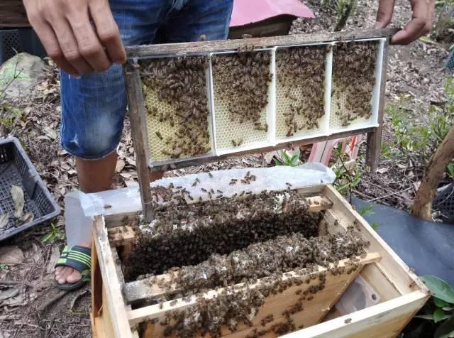 蜂蜜的副作用 纯蜂蜜 保肝 天然土蜂蜜 蜂蜜知识讲堂