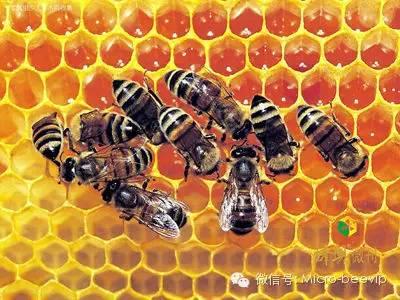 阿坝蜂蜜 蜂蜜的鉴别 我国 云南省 蜂蜜价格