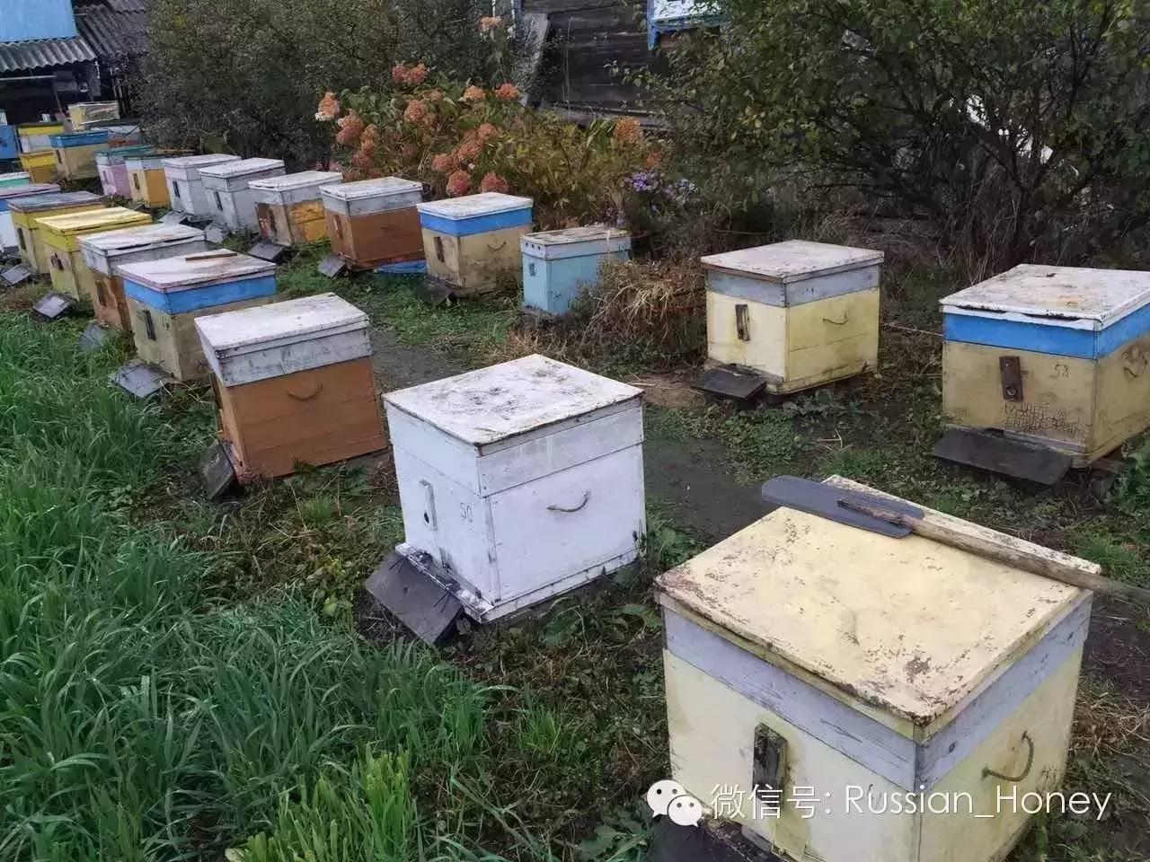 生殖系统 纯土蜂蜜 买蜂蜜 蜂蜜薯片 什么牌子的蜂蜜好