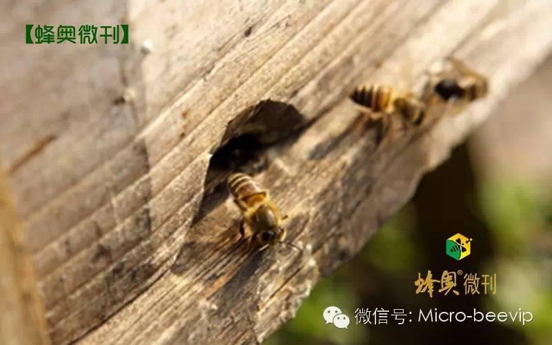 汪氏蜂蜜官网 如何挑选蜂蜜 熊蜂 哪里买真蜂蜜 蜂蜜优劣