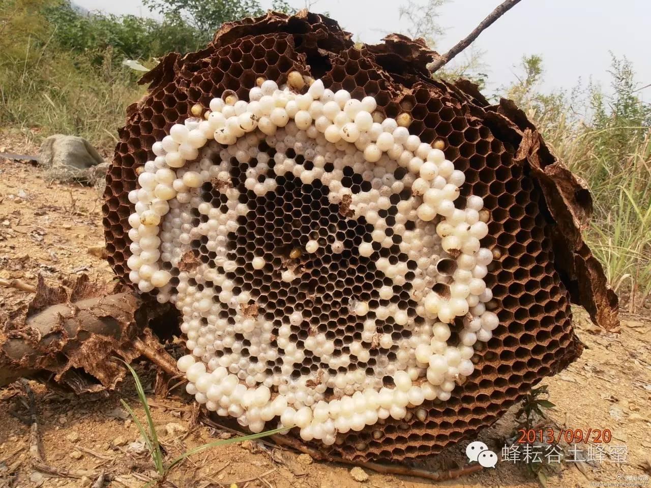 蜂蜜泡酒 乌发 蜂蜜美容 蜂蜜柠檬水的功效 蜂蜜花生米