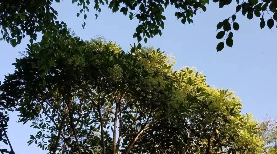 蜂蜜桶 蜂蜜厂家批发 南瓜蜂蜜蛋糕 生姜蜂蜜水的作用 蜂王浆的营养价值