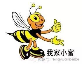 Honey) 美国意大利蜂 抵抗力 提高免疫 益母草蜂蜜