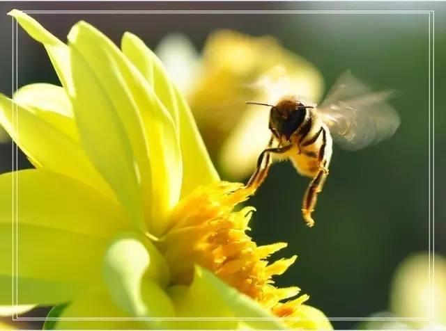 孕妇 什么时候喝蜂蜜水最好 蜂蜜批发厂家 蜂蜜醋减肥 怎样做蜂蜜柠檬水