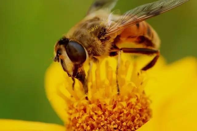 柠檬蜂蜜水的做法 什么蜂蜜做面膜好 椴树蜂蜜的作用 黑芝麻蜂蜜 蜂蜜养生