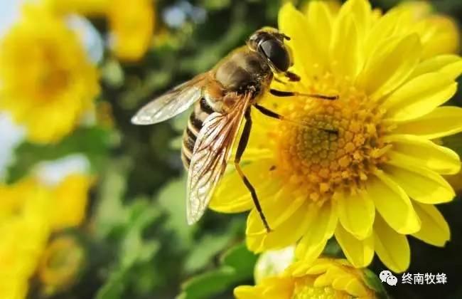 好蜂蜜多少钱一斤 什么蜂蜜好 市场 宁波蜜雪儿蜂业有限公司 蜂胶的保存