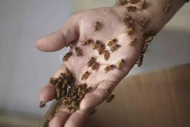生姜蜂蜜水去老年斑 蜂蜜加醋的作用 营养品 蜂蜜的种类 苦瓜蜂蜜