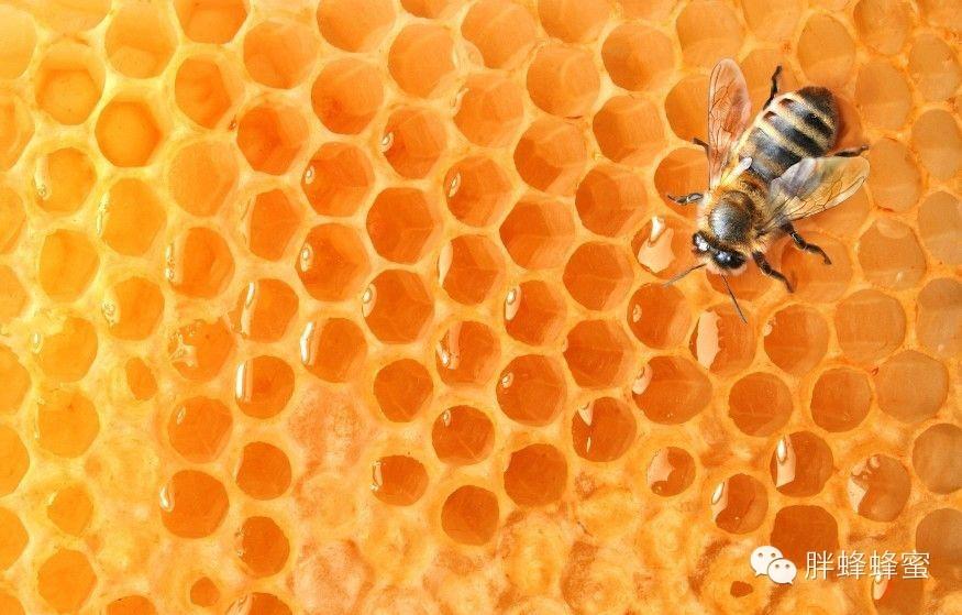 为什么说蜂蜜是一种安全食品