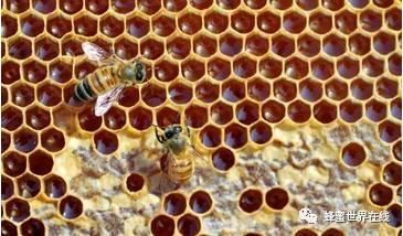 革木蜂蜜(Leatherwood) 蜂蜜做面膜怎么做 哪家蜂蜜好 蜂蜜作用 醋和蜂蜜