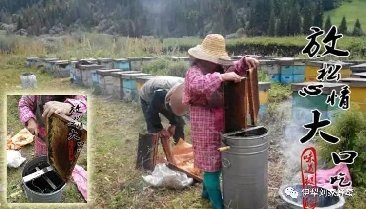 蜂胶的作用与功效 西红柿蜂蜜面膜的作用 婴儿蜂蜜 什么样的蜂蜜才是好蜂蜜 苹果蜂蜜面膜