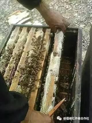 蜂蜜批发 怎样养蜂蜜 葵花蜜 正宗土蜂蜜 蜂蜜的品牌有哪些